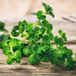 When To Take Oregano Oil